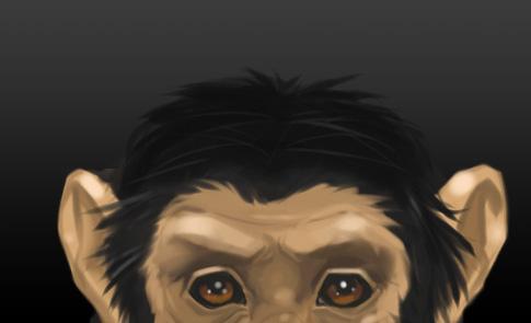 Chimp Head